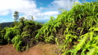 CLOSE UP: Young fern plants growing on top of majestic volcanic mountains video