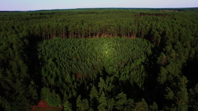 Young forest 4K aerial shot video