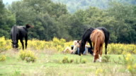 Young friends enjoy nature outdoor with horses - HD video footage video