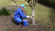 Young gardener careful whitening his garden trees ant touch branch with love video