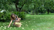 Young gardener woman in shorts gather pick ripe apple fruits under tree to wicker basket video