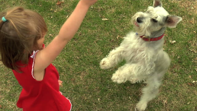 Young Girl and Dog playing video