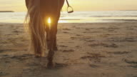 Young Girl and her Horse Walking on Beach in Sunset Light. Shot of Horse Legs. video