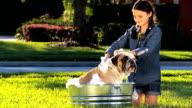 Young Girl Bathing Family Bulldog video