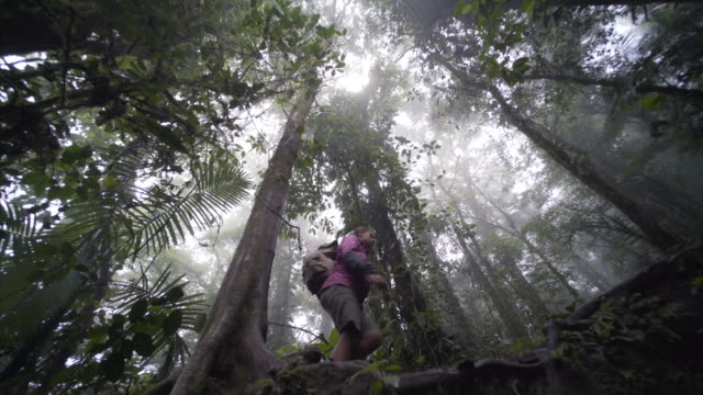Young girl in jungle video