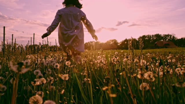 SLO MO LA TS Young girl running through dandelions at sunset video
