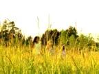 PAL Young girls run through tall gras video