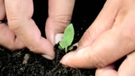young green planting video