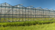 CLOSE UP: Young green vegetable seedlings growing in hot modern glass hothouses video