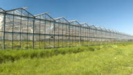CLOSE UP: Young green vegetable seedlings growing in hot modern glasshouses video