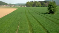 AERIAL: Young green wheat leaves on farmland field swinging in summer breeze video