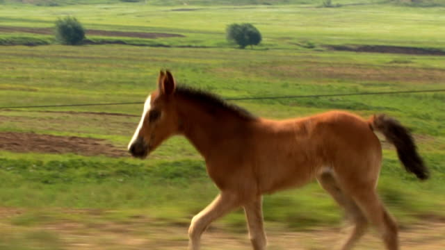 Young Horse video