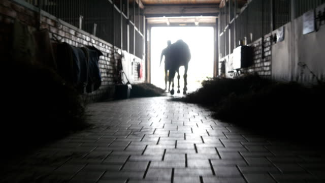 Young jockey is walking with a horse out of a stable. Man leading horse out of stable. Male silhouette with stallion. Rear back view. Love for animal. Beautiful background. Steadicam shot video