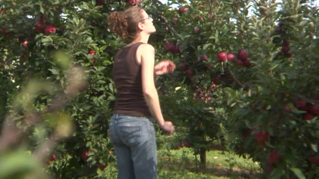HD: Young lady apple picking video