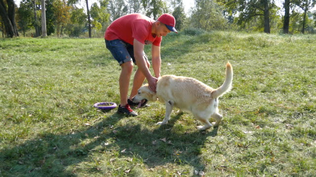 Young man and dog playing outdoor at nature. Labrador or golden retriever and his male owner spend time together at the green meadow. Guy stroking domestic animal. Close up video
