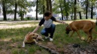 Young man caress the dogs on the grass in the park video