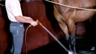 Young man cleans the horse video