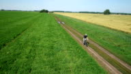 AERIAL: Young man cycling on bicycle at rural road through green and yellow field video