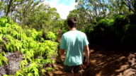 Young man hiking along dirt path leading trough lush jungle in Hawaii mountains video