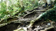 Young man hiking in tropical jungle forest video