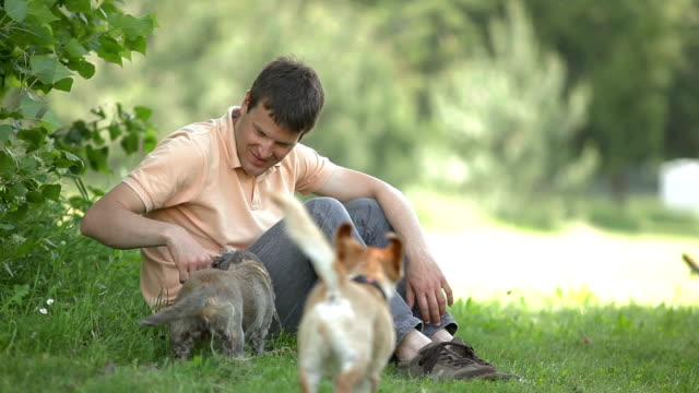 Young man playing with dogs video