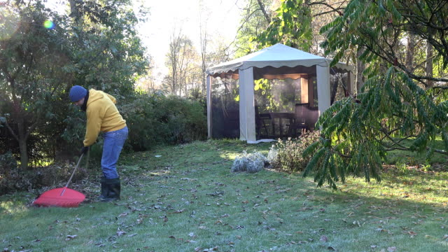 young man rake leaves in yard summerhouse in early morning. FullHD video