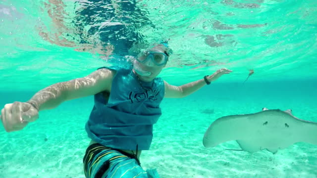 SLOW MOTION: Young man snorkeling underwater with stingrays and sharks video