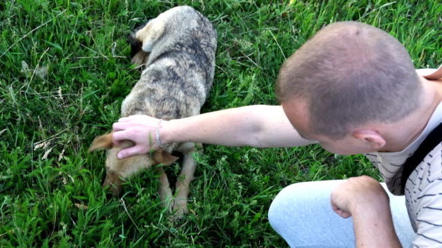 young man stroking a stray dog and plays with it video