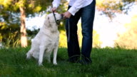 young man taking old dog with a leash video