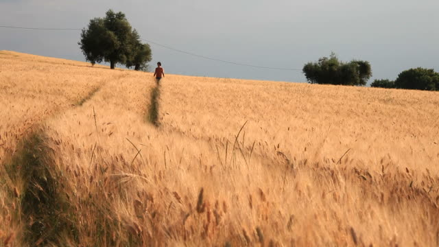 Young Man Walking in a Wheat Field, HD Video video
