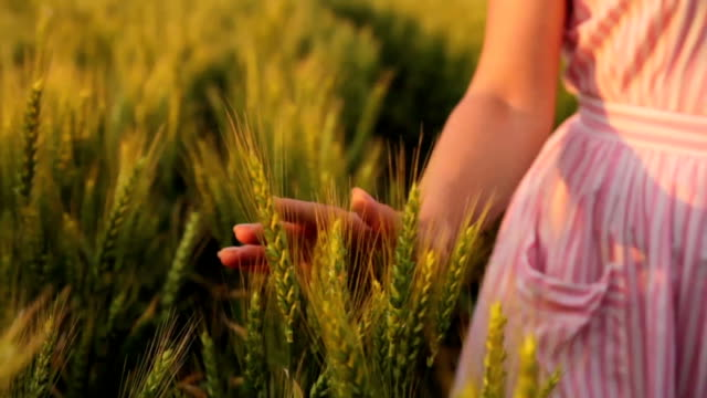 Young Woman Caressing Wheat Close Up Freedom Concept video