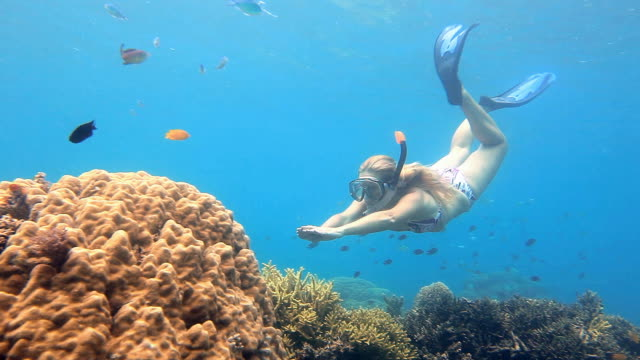 Young woman dives to coral reef video