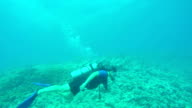 UNDERWATER: Young woman diving and swimming with sharks above rocky coral reef video