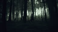 MONTAGE Young woman experiencing horror deep in the woods video