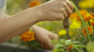 Young woman gardening in her garden video