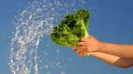 Young Woman Holding Green Lettuce with Splash video
