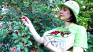 Young woman in a cherry orchard video