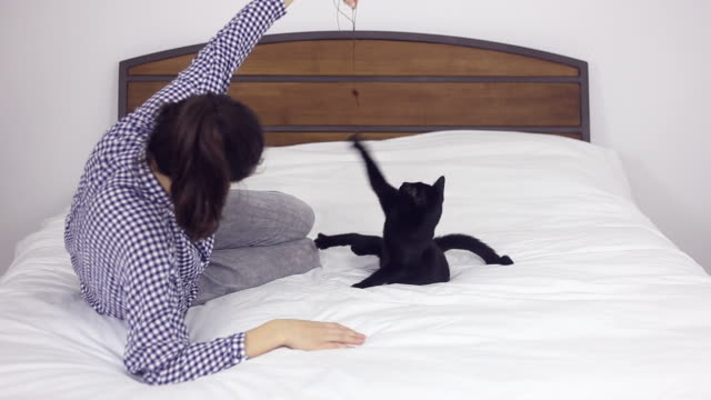 Young woman lying in bed and playing with a kitten. video