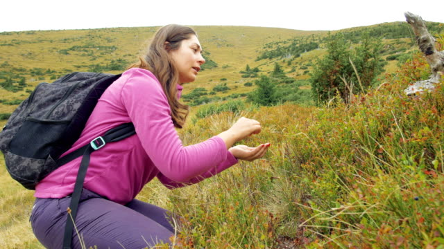 Young woman picking berries in mountains video