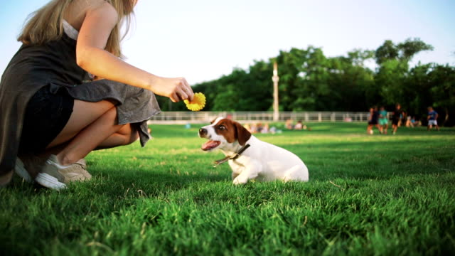 young woman playing with little cute jack russel terrier in park, slow motion video