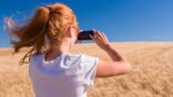 Young woman taking pictures of golden wheat field video