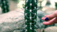 HD MACRO: Young woman touching big cactus with long spines video