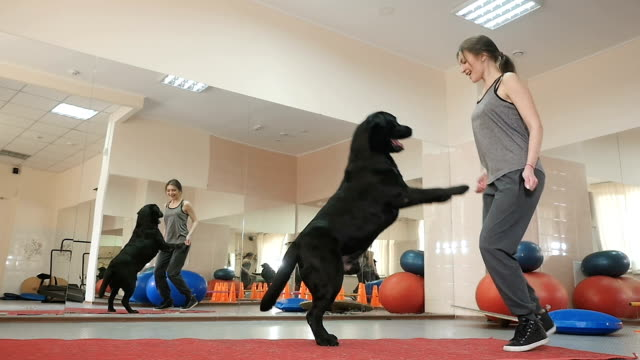 Young woman training her labrador in the gym video