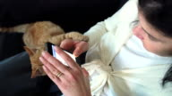 young woman trying to use her mobile phone while the cat disturbing her video