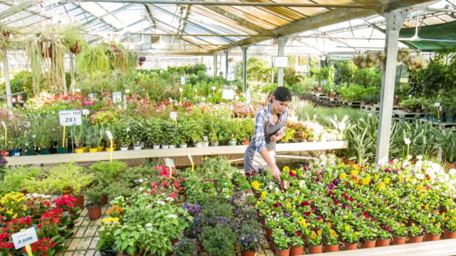 Young woman using digital tablet in garden center video