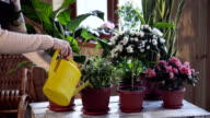 Young woman watering flowers inside home video