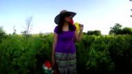 young woman with colorful balloons in summer field video