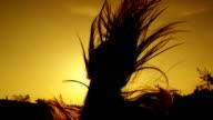 RALENTI: Jeune femme avec les cheveux longs de course au coucher du soleil - Vidéo