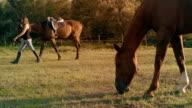 Young Women Horse Sunlight Farm Paddock Slow Motion video