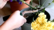 Young women pruning stems of cut flowers while working in florist shop video